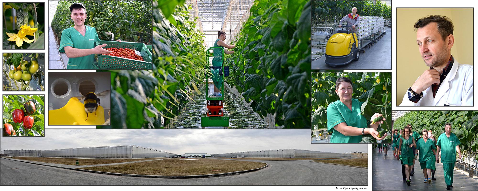 Агро инвест калининград вакансии